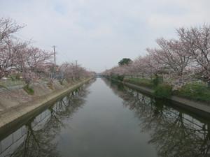 Ishiki_akusuiro01