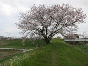 Yokosuka05