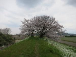 Yokosuka06