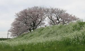 Yokosuka07