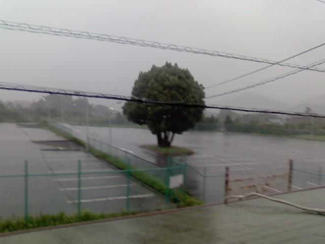 久しぶりの雨は大雨